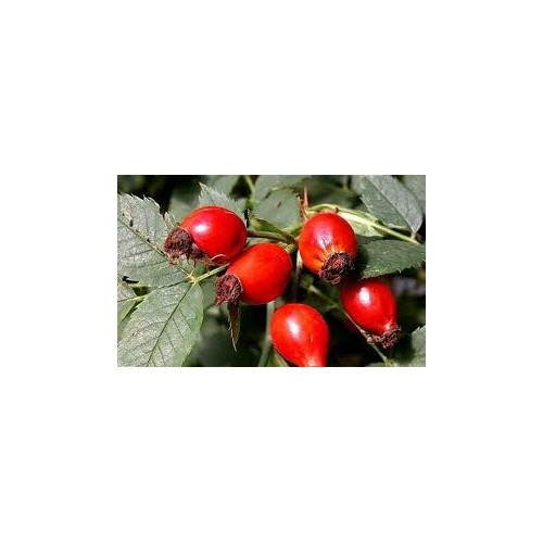 BIO Rosehip Oil (Wildrose oil), 30 ml